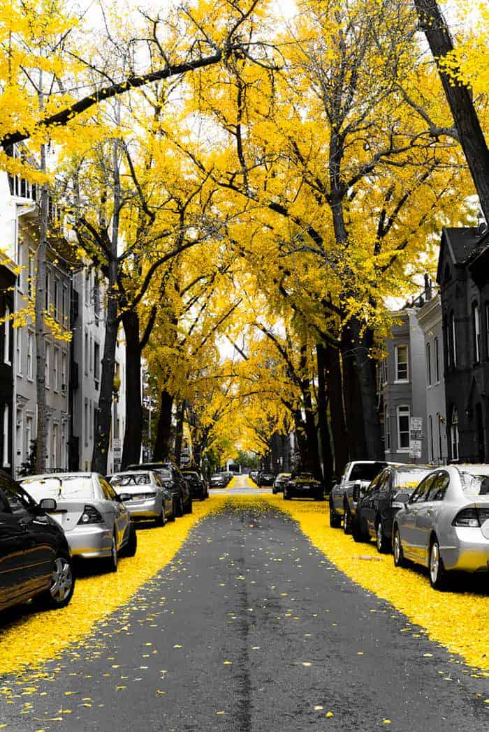 10 Beautiful Streets Shaded by Trees 1 - Flowers & Plants - 1001 Gardens