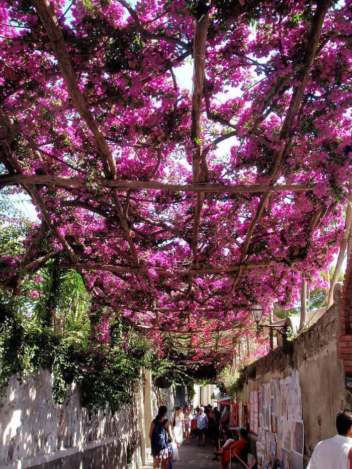 10 Beautiful Streets Shaded by Trees - flowers-plants-planters