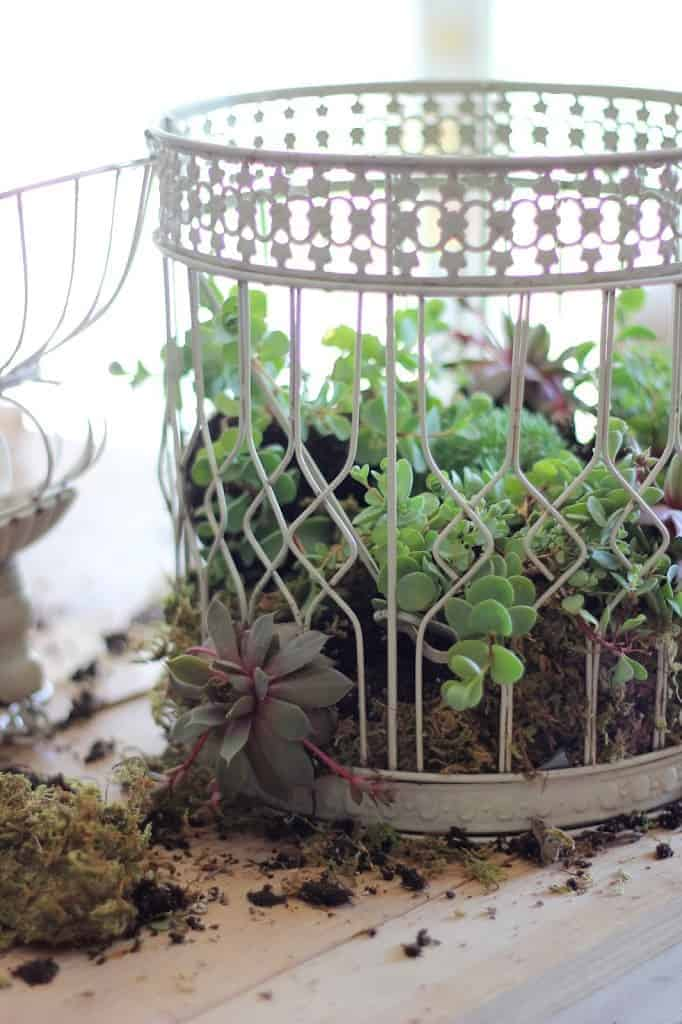 Diy: Transform A Birdcage Into Succulents Planter 4 - Flowers & Plants - 1001 Gardens