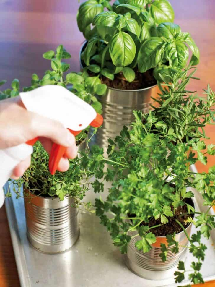 Upcycled tin cans into kitchen countertop herb garden for Kitchen herb garden