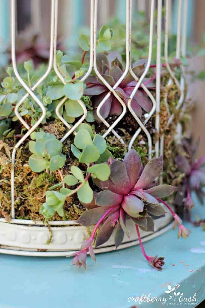 Diy: Transform A Birdcage Into Succulents Planter 6 - Flowers & Plants - 1001 Gardens
