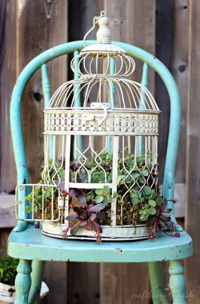 Diy: Transform A Birdcage Into Succulents Planter 2 - Flowers & Plants - 1001 Gardens