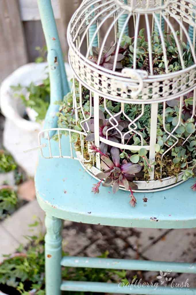 Diy: Transform A Birdcage Into Succulents Planter 3 - Flowers & Plants - 1001 Gardens