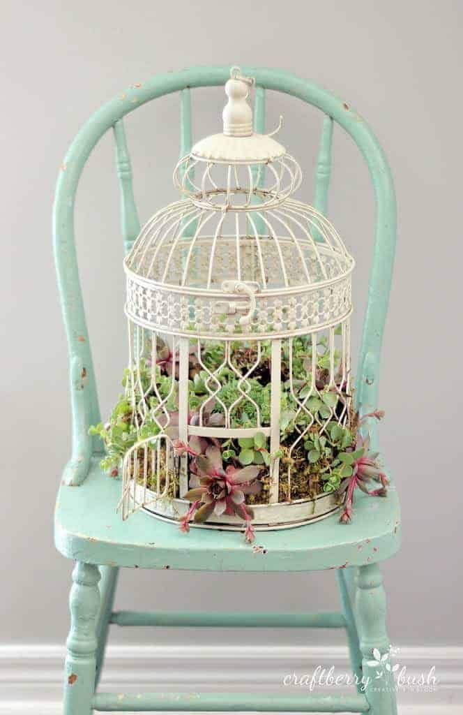 Diy: Transform A Birdcage Into Succulents Planter 1 - Flowers & Plants - 1001 Gardens