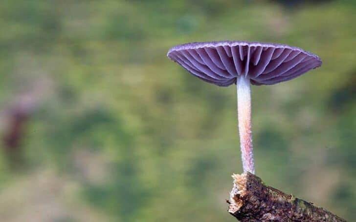 Beautiful Mushrooms Photography by Steve Axford - flowers-plants-planters
