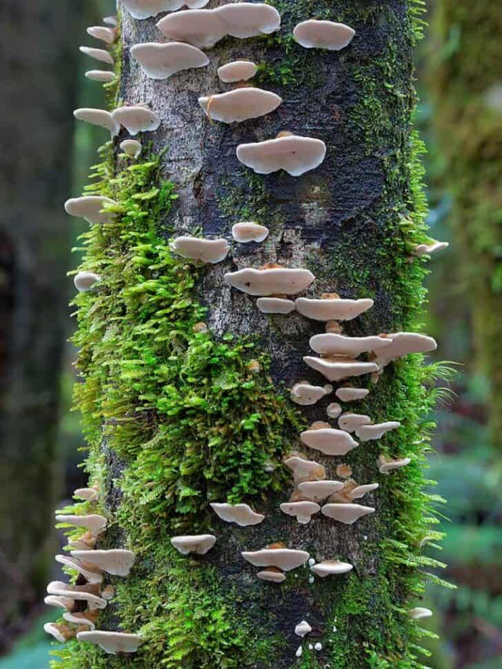 Beautiful Mushrooms Photography by Steve Axford Flowers, Plants & Planters