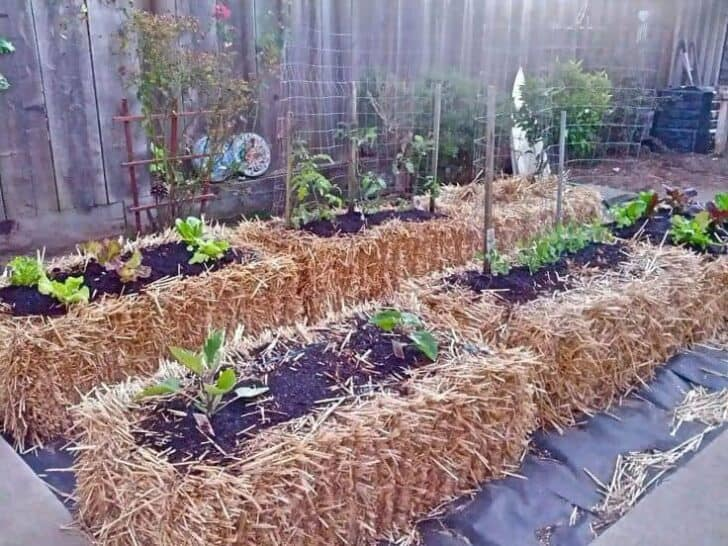 Introduction to Straw Bale Gardening - flowers-plants-planters