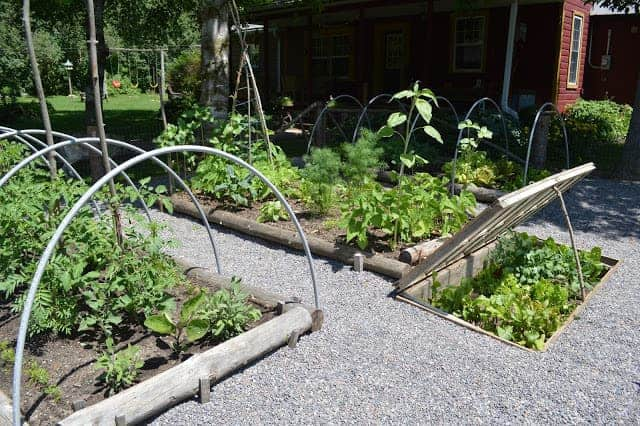 Perfect Example Of A Vegetable Garden Layout - flowers-plants-planters
