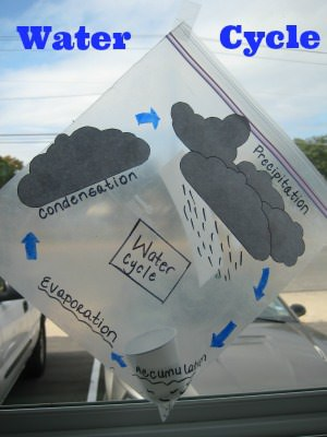 Diy Tutorial: Fog, Water, Rain! Create Your Own Water Cycle in a Plastic Bag Flowers, Plants & Planters