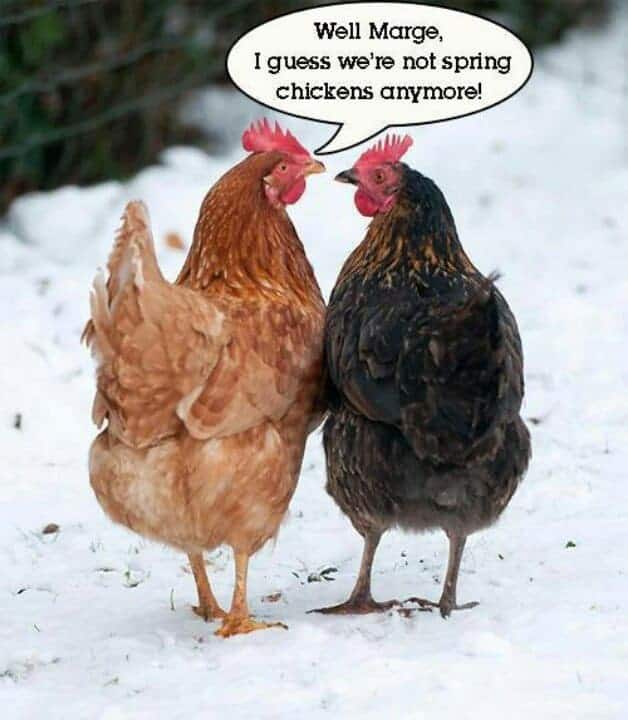 10 Quotes For Hens Lovers 1001 Gardens