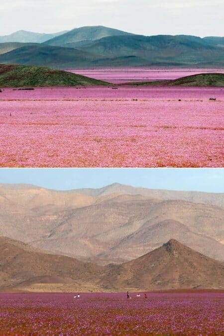How Heavy Rain Falls Can Transform a Desert into a Giant Meadow Landscape