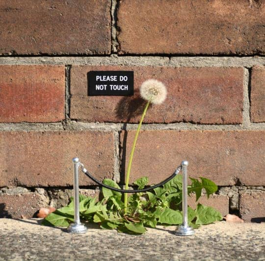 Dandelion Art Installation Garden Decor Guerrilla & Urban Gardening