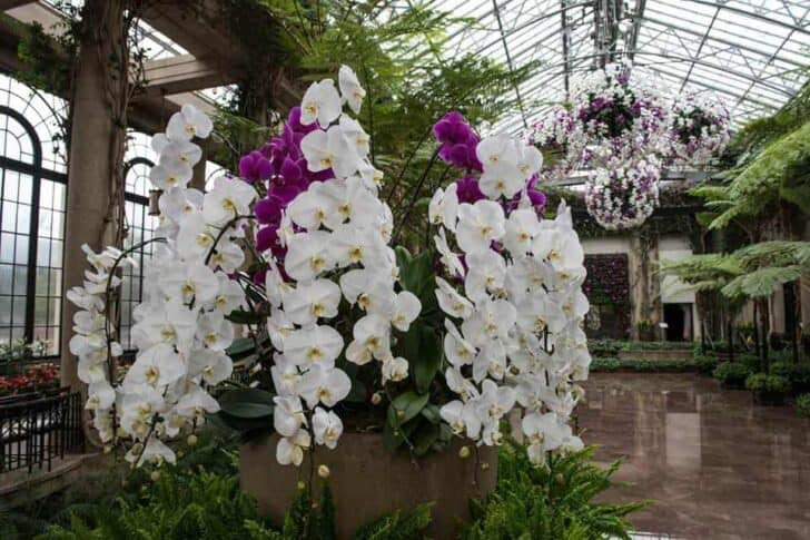 Orchid Curtain Stands 17 Feet Tall 1001 Gardens