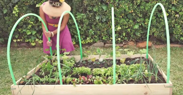 Genius! How to Make Your Own Greenhouse with 4 Hula-hoops Flowers, Plants & Planters