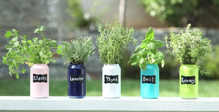 Use old soda cans as plant holders