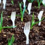 Why put plastic forks in the garden?