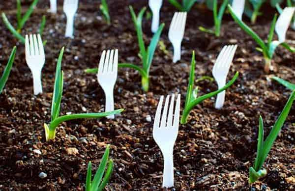 She Puts Forks In Her Garden To Solve A Common Problem: 5 Genius Ideas That Make Gardening Easier Flowers, Plants & Planters
