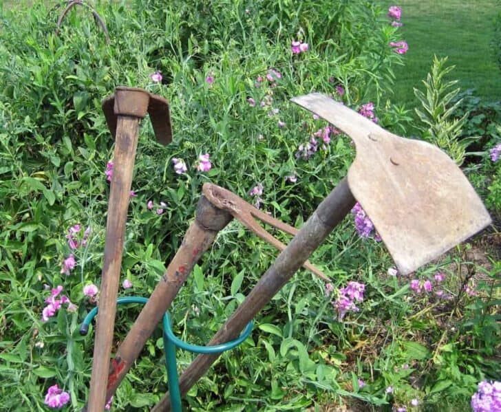 9 Essential Garden Tools for Your Shed