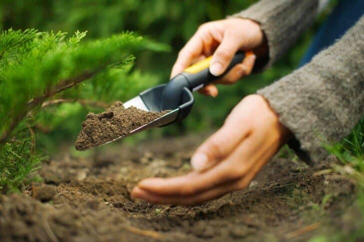 9 Essential Garden Tools For Your Shed 1001 Gardens