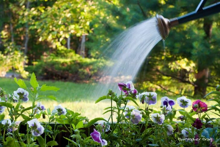 Garden Care & Maintenance Methods