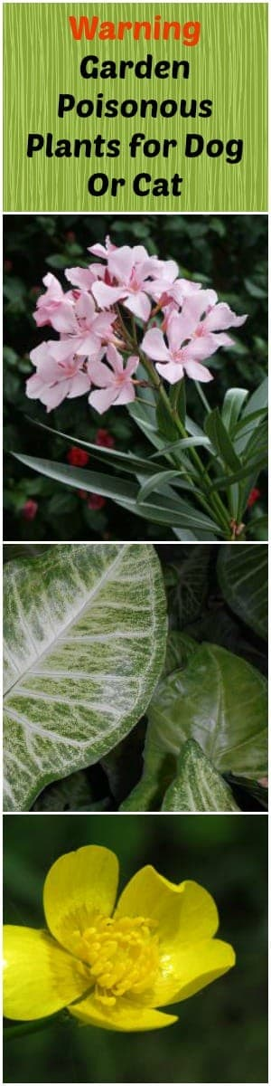 Warning: Garden Poisonous Plants for Dog Or Cat -