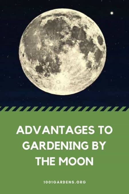 Advantages to Gardening by the Moon