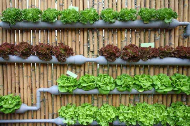 20 Easy DIY Gutter Garden Ideas   Garden Decor, Flowers Plants Planters