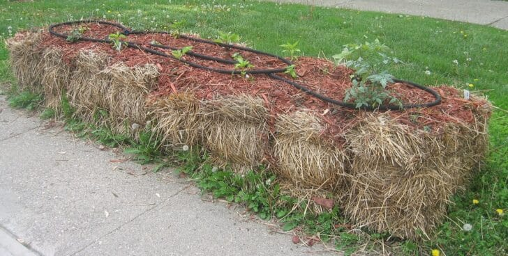 Gardening in Straw Bales Full Tutorial