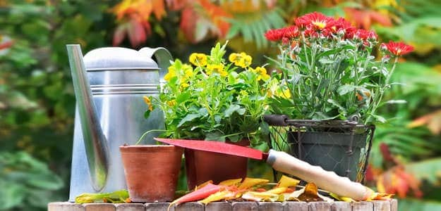 List of Fall Gardening