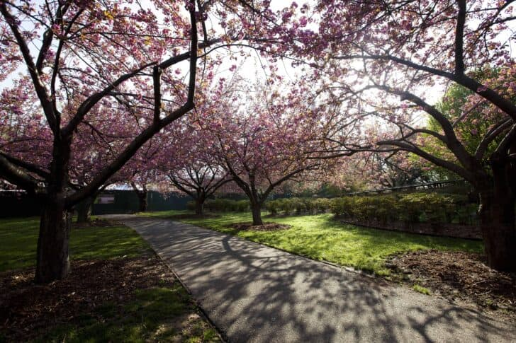 The Most Beautiful Botanical Parks Of New York 1001 Gardens