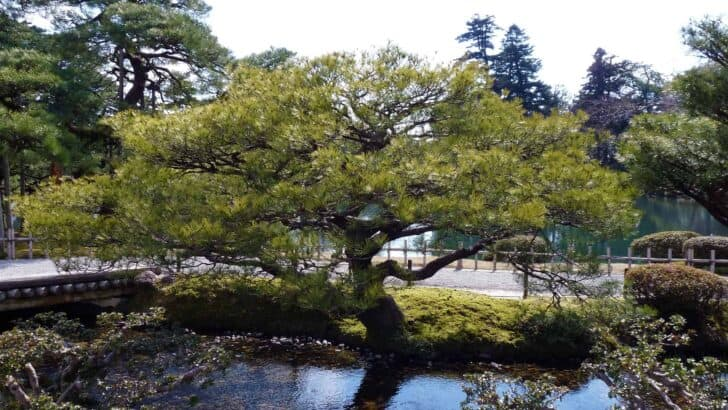 The Most Beautiful Japanese Gardens from Japan
