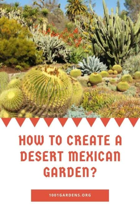 How to Create a Desert Mexican Garden?