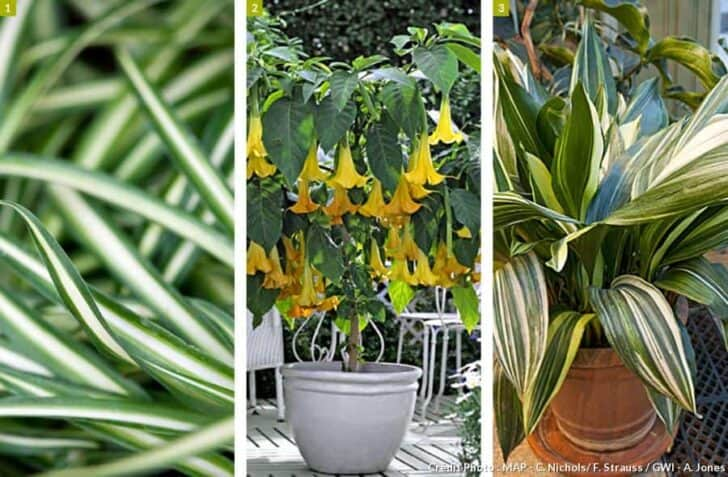 Create a Sustainable Tropical Garden