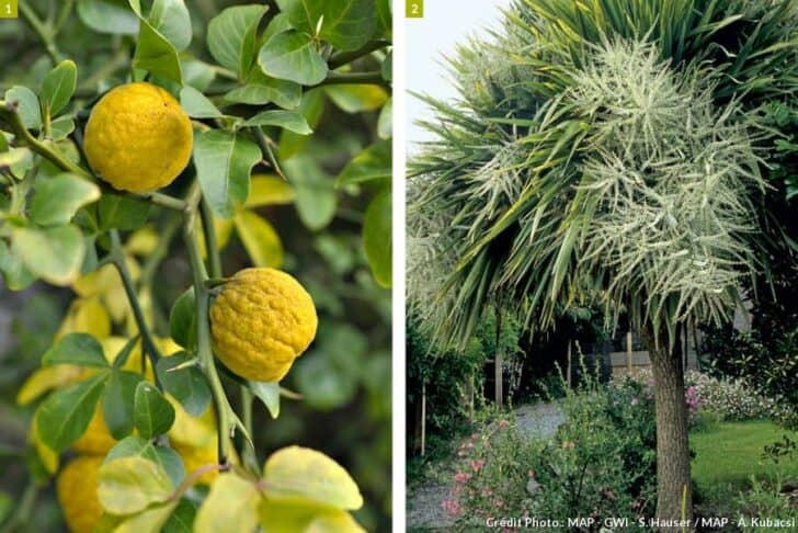 Create a Sustainable Tropical Garden Flowers, Plants & Planters Landscapes