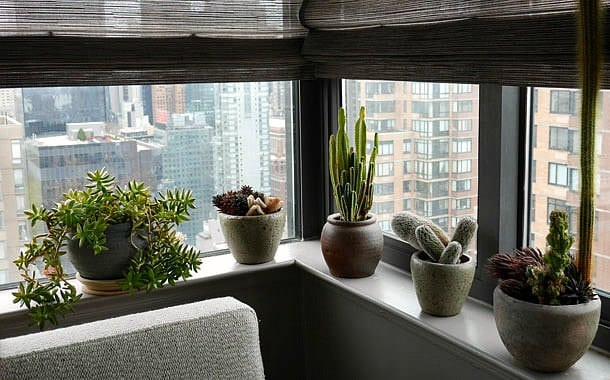 Create Your Windowsill Cactus Collection - flowers-plants-planters