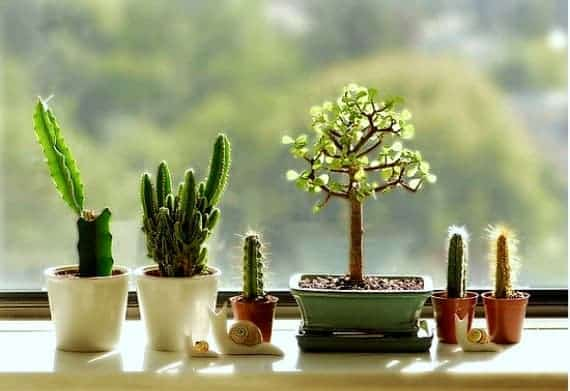Create Your Windowsill Cactus Collection
