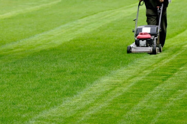Common Causes For Sick Lawns Landscapes