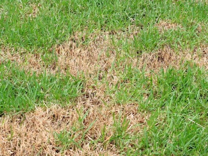 Common Causes For Sick Lawns 1 - Landscape & Backyard Ideas