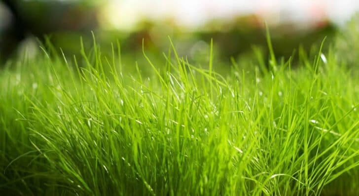Common Causes For Sick Lawns 3 - Landscape & Backyard Ideas