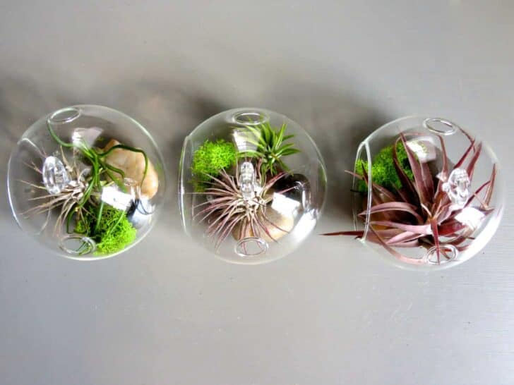 Hanging Air Plant Terrariums 3 - Flowers & Plants