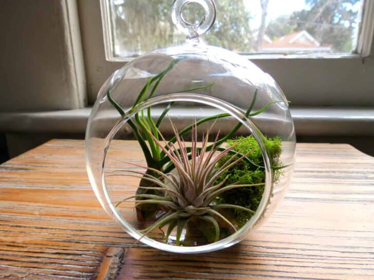 Hanging Air Plant Terrariums 5 - Flowers & Plants
