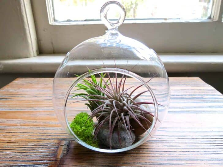 Hanging Air Plant Terrariums Flowers, Plants & Planters