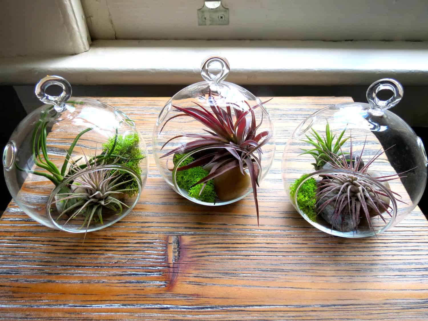 Hanging Air Plant Terrariums - flowers-plants-planters