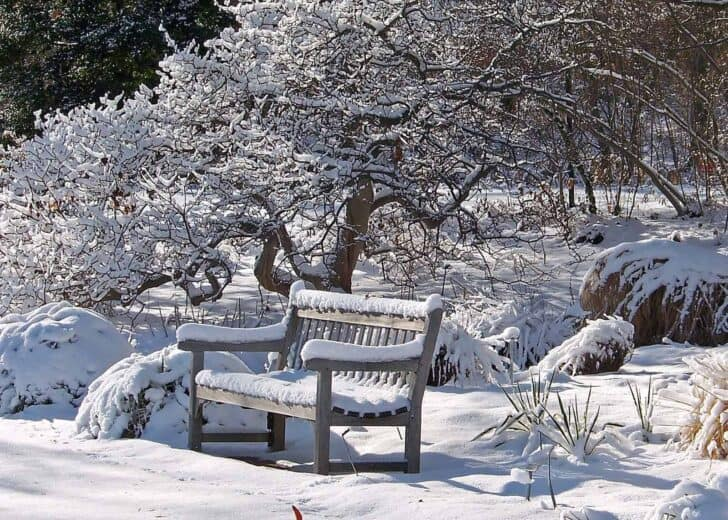 What to Do in the Garden in Winter