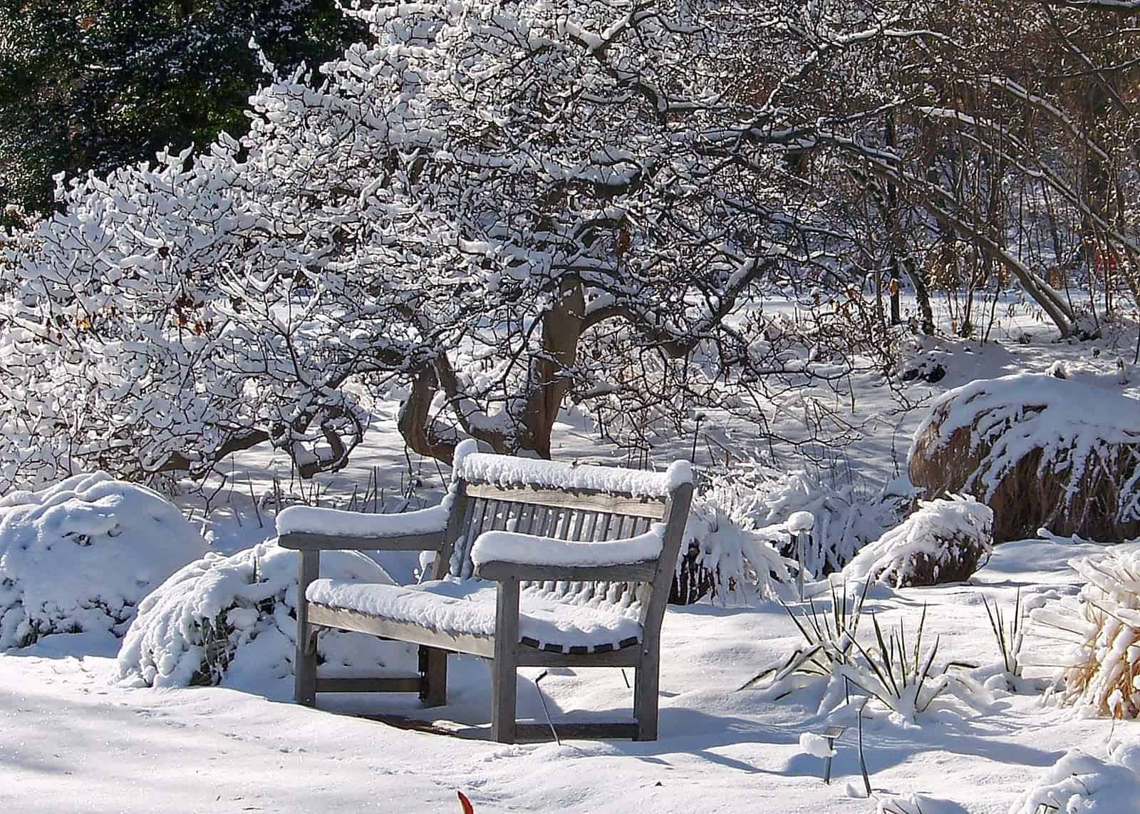 What to do in the garden during the winter 1001 gardens - Gardening mistakes maintaining garden winter ...