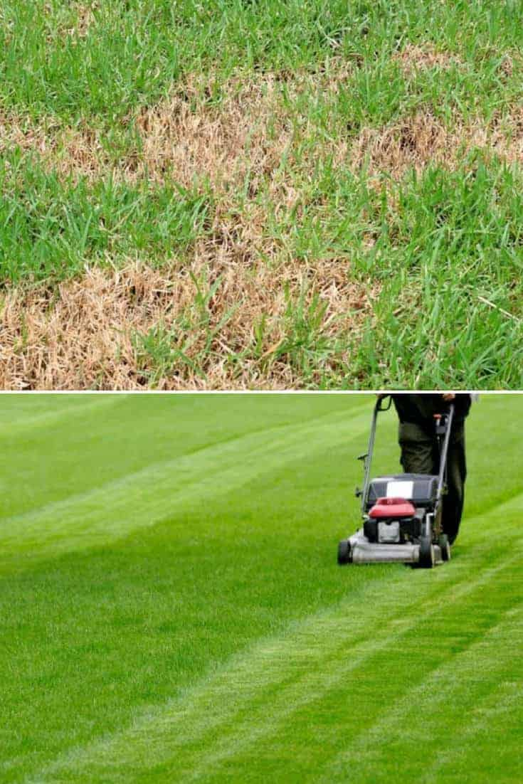 Common Causes For Sick Lawns