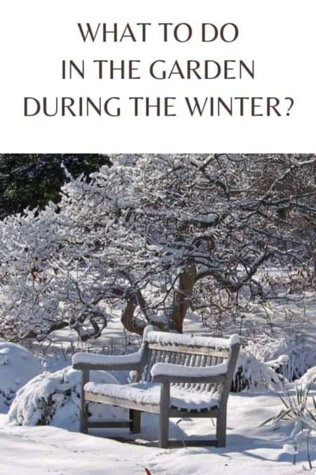 What to Do in the Garden during the Winter?