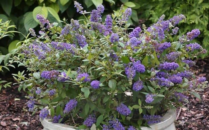 Six Must-have Plants to Add to Your Pool Landscape 4 - Swimming Pools & Hot Tubs - 1001 Gardens