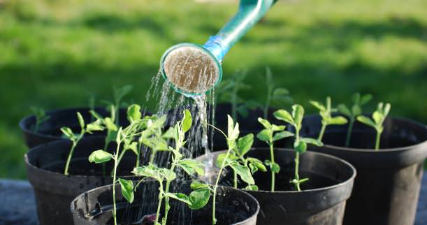 7 Things Successful Gardeners Never Do - flowers-plants-planters