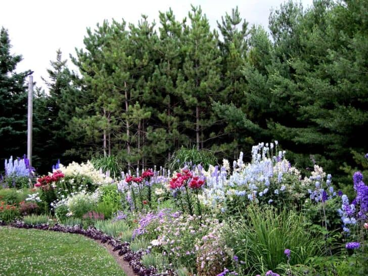 A guide to successfully designing a perennial garden for Garden design ideas ontario